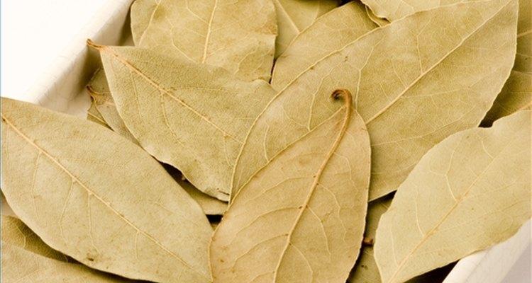 Folhas de louro são usadas desde a antiguidade