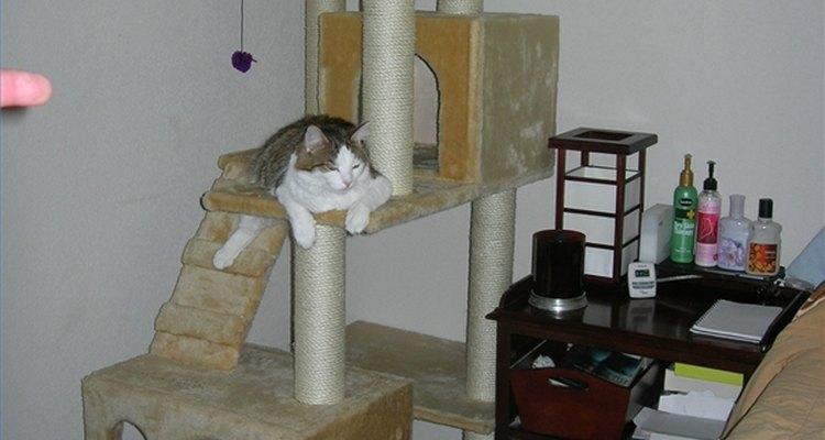 Las casas para gato son una grán opción.