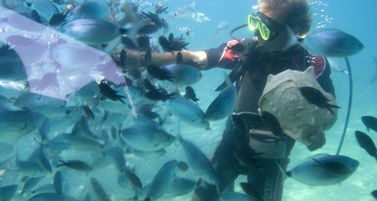 Uma máscara de mergulho com lentes de grau é uma das opções de correção disponíveis para mergulhadores