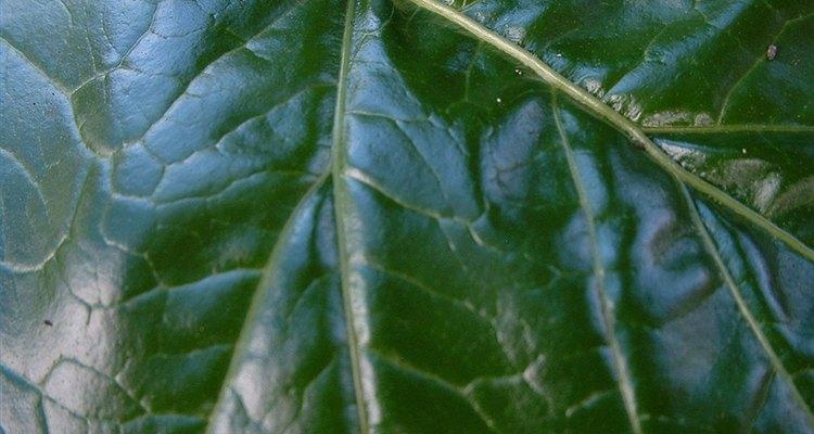 Plantas verdes e algumas bactérias fazem a fotossíntese