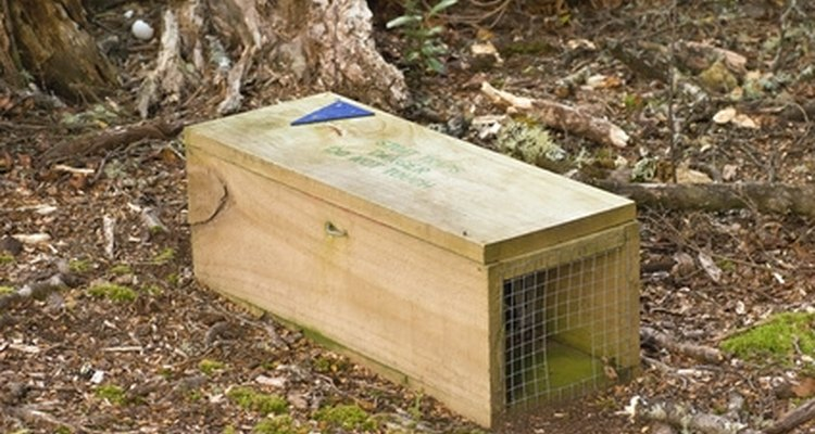 Homemade hunting traps can work just as well as commercially made ones.