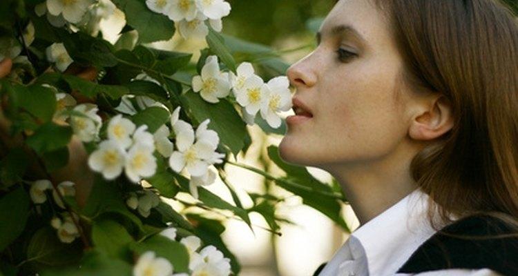 La flor de jazmín es conocida por su sutil belleza y aroma.