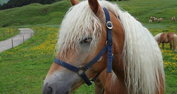 El pelo del caballo se puede usar para hacer pulseras.
