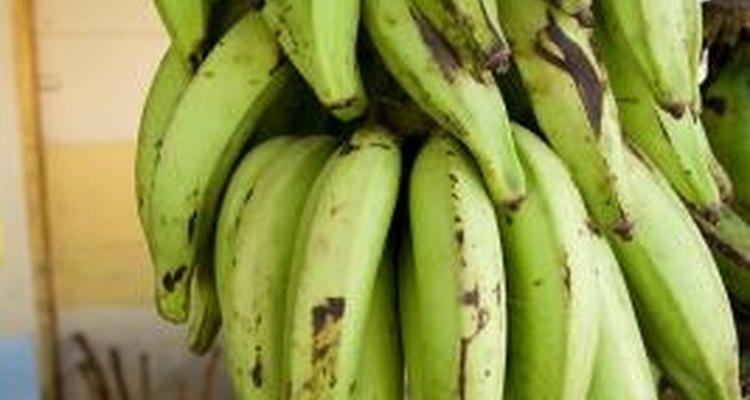 Los plátanos se parecen mucho a las bananas.