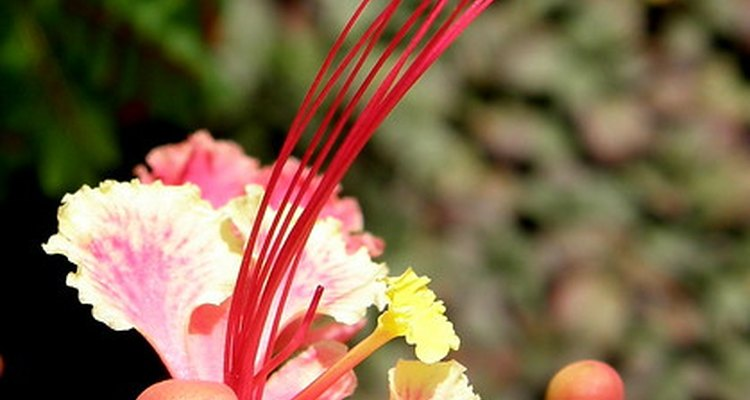 Toxic qualities negate the charm of these beautiful plants for pet owners.