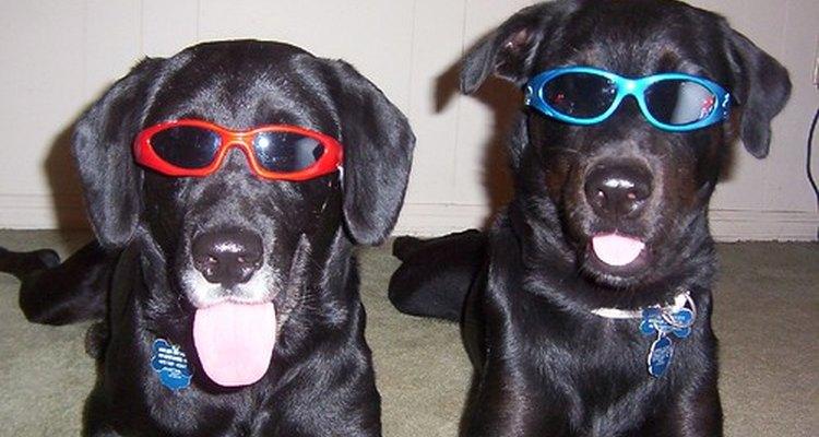 Perros jóvenes divirtiéndose.