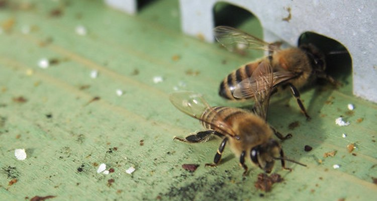 Las abejas lo hacen.