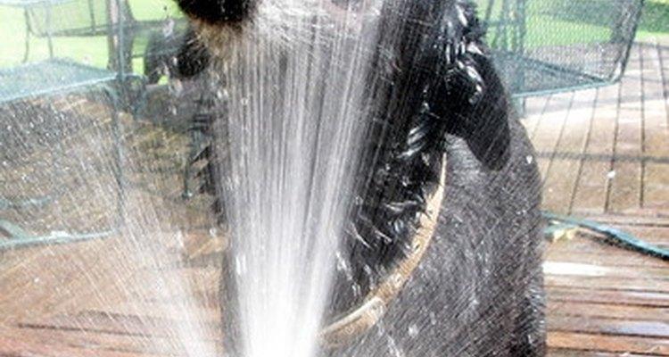 Os cães raramente bebem uma grande quantidade de água de uma só vez