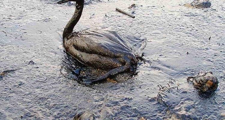 Las plumas son adsorbentes muy comunes.