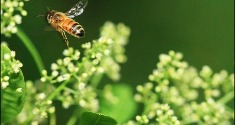 A bee buzzes along.