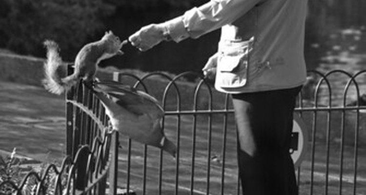 Man feeding squirrel