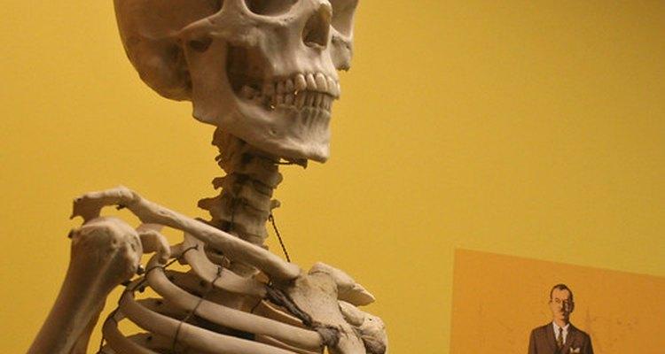 Cálcio: deixa ossos fortes e corpos saudáveis