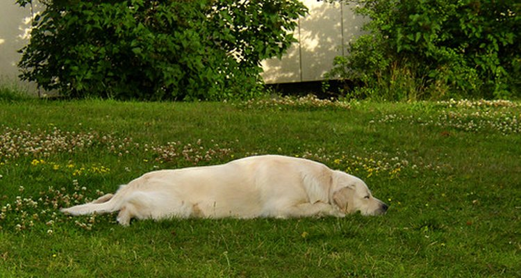 Dog napping in garden
