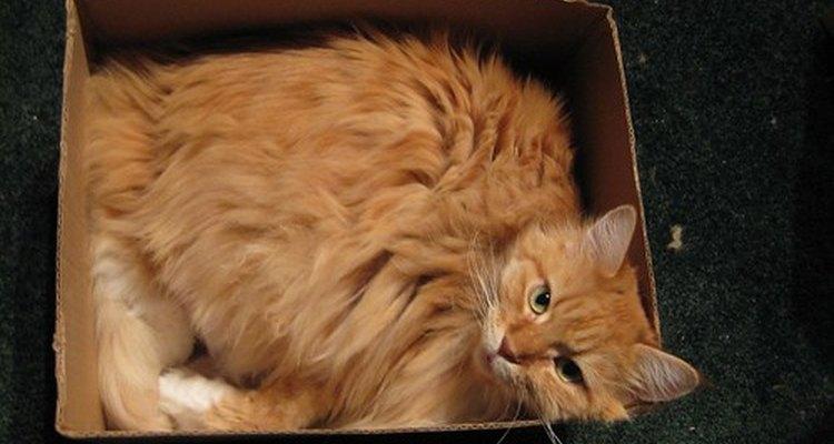 A los gatos les gustan los espacios pequeños y cómodos.