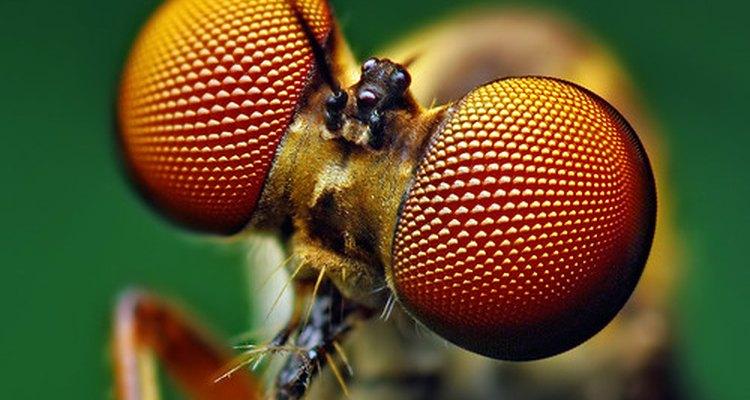 Larvas das moscas