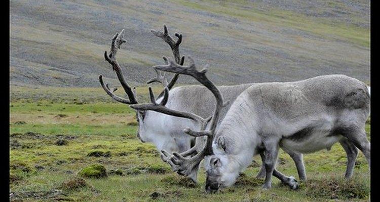 A delicada vida selvagem luta para sobreviver à medida que o impacto humano drasticamente muda seu ambiente