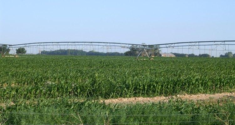 El campo de la agricultura incluye una variedad de puestos de trabajo.