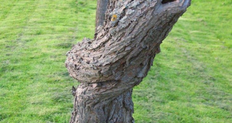 Esboza una imagen de tronco de árbol.