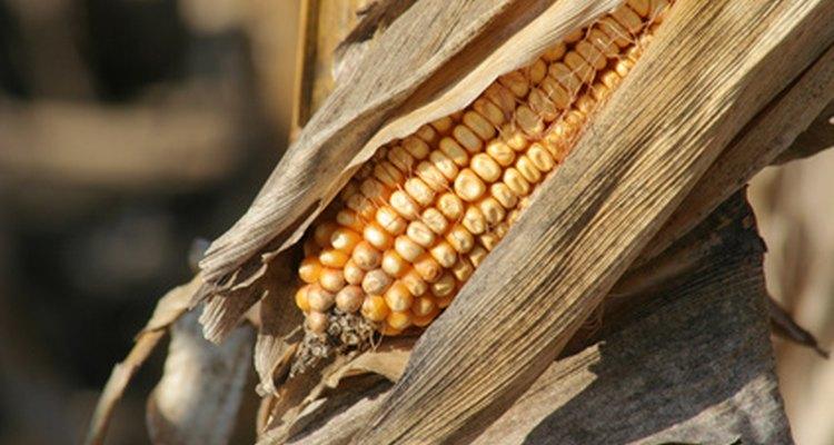 A palha de milho é um ótimo material para o adubo