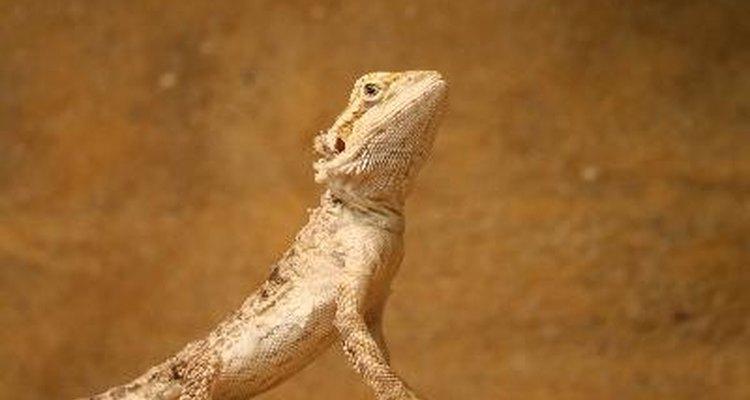 Ciclos de vida de los reptiles.