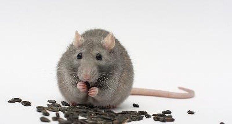 Es posible experimentar algunos de los efectos del veneno para ratas sin nunca haberlo ingerido.