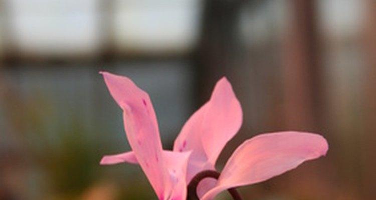 O mofo branco é um problema comum em plantas domésticas