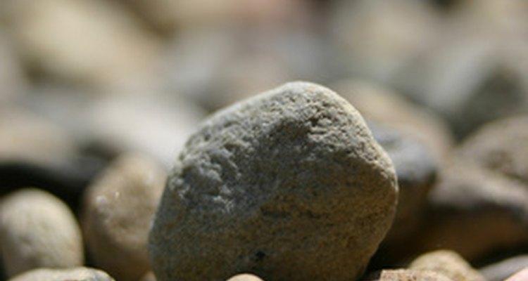 Los reptiles se tragan piedras para ayudar a la digestión.