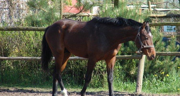 Carregar peso em excesso pode ferir seu cavalo