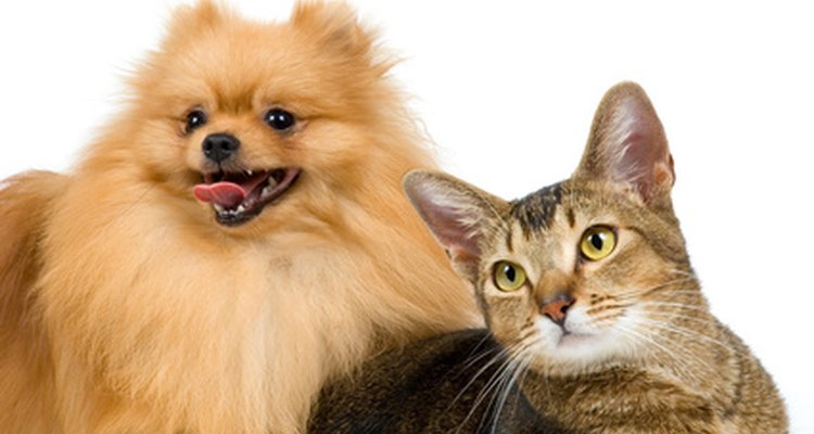 Dogs and cats die from eating bait or poisoned rodents.