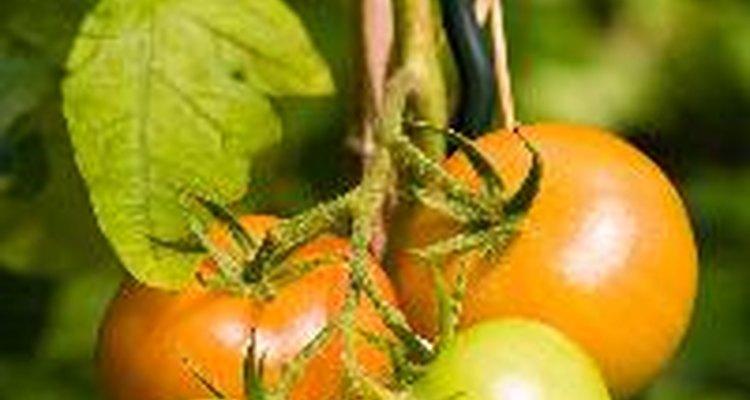 Revisa las plantas que crecen en canastas colgantes para asegurarte de que el techo no las sombree.