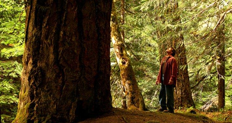 La carrera como naturalista puede incluir el trabajo en parques nacionales o estatales.