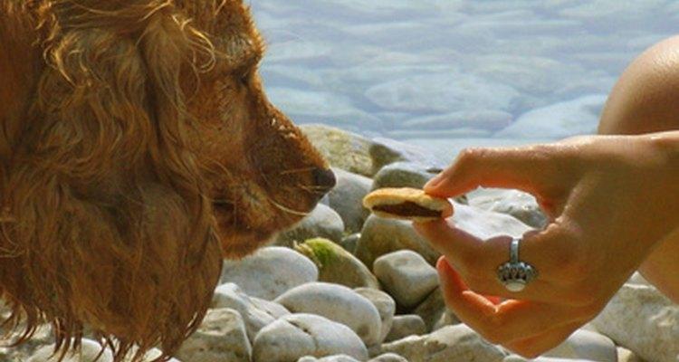 A mirtazapina pode ajudar um cachorro sofrendo de problemas de estômago instável