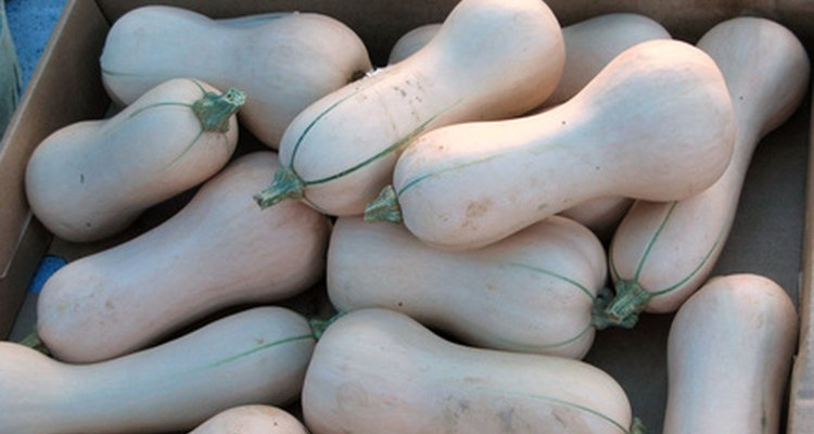 You have several NPK-fertiliser options for growing butternut squash.