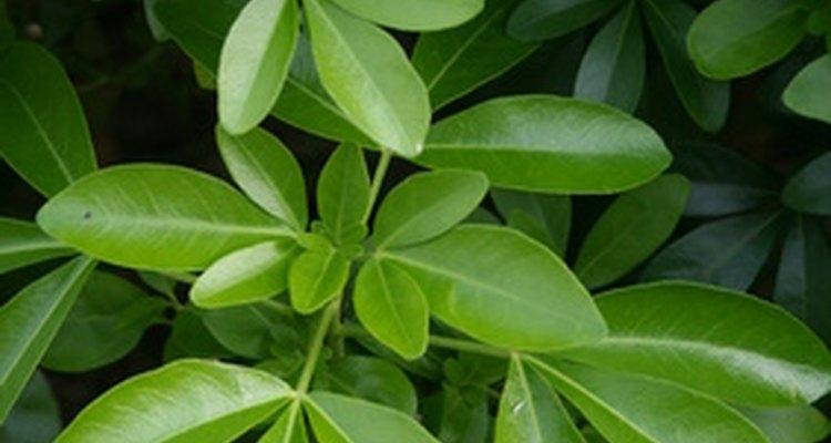 El moho prospera en jardines húmedos y atiborrados en los que la circulación de aire es pobre.