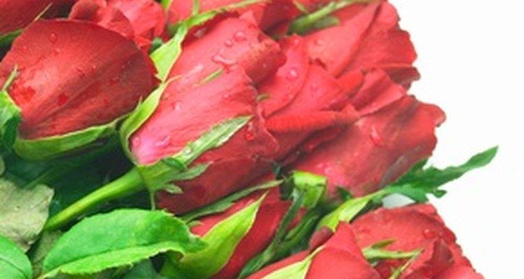 As rosas vermelhas são um símbolo de amor