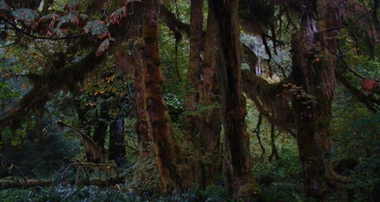 Musgo exagerado em árvores
