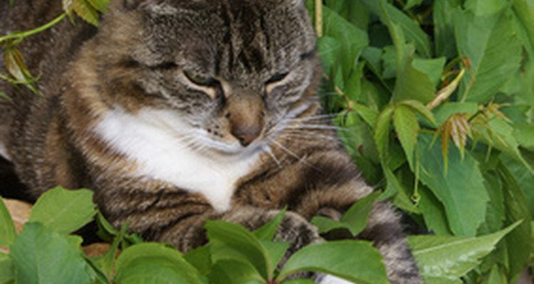 Herbs can keep cats out of your garden.