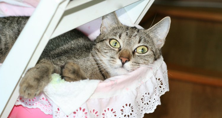 A sedate lifestyle has increased the average weight of domestic cats.