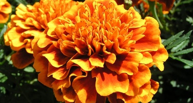 Sementes de flores são boas opções quando se tem pouco espaço