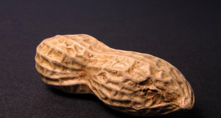 Un cacahuate es una leguminosa.