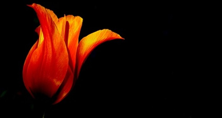 Acostumbrarse a la oscuridad es una adaptación sensorial.