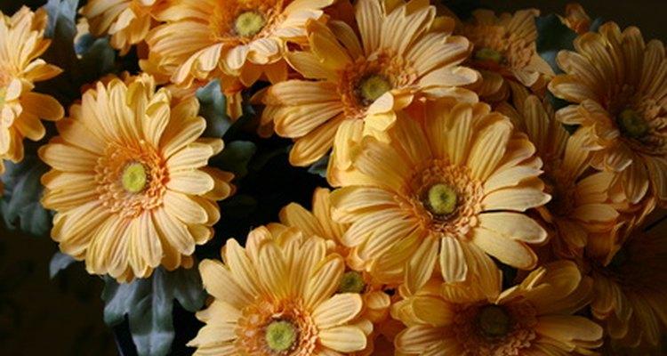 Las variedades de flores comunes se pueden usar en adornos o en jardines.