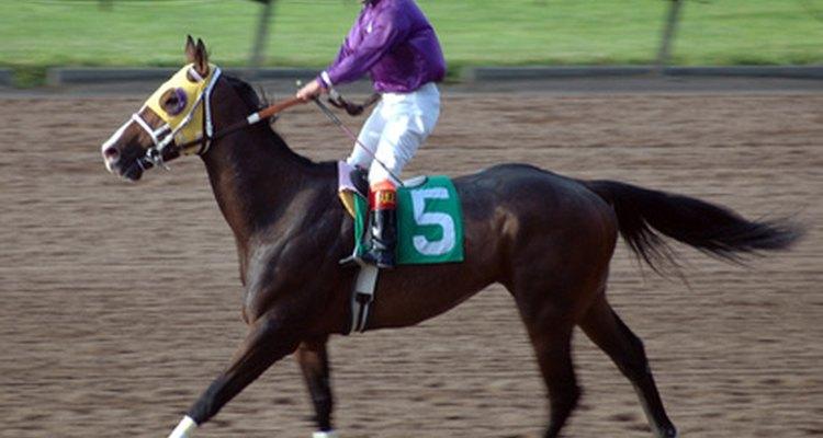 Cavalos de corrida frequentemente sofrem com uma fratura em um osso da perna