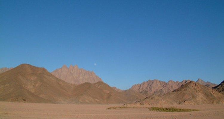 Las plantas y animales se adaptan a las duras condiciones de vida del desierto del Sahara.