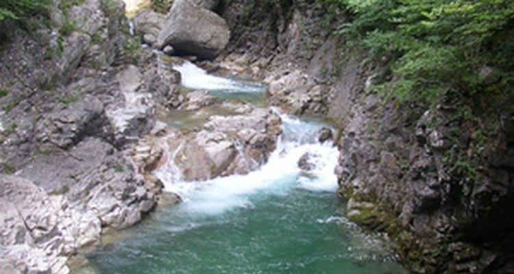 Las lombrices del orden de Lumbriculida habitan cerca de agua dulce.