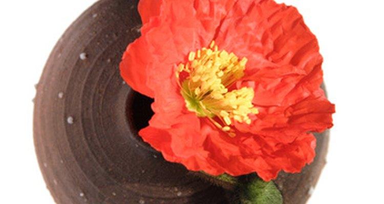 P. nudaucaule, Iceland poppy, is native to Asia.