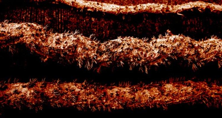 Colonia de termitas en la madera.