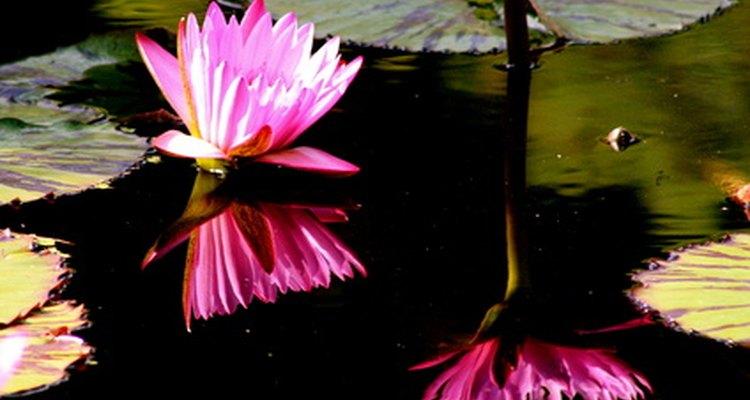 Una flowering rush flotando en un río.