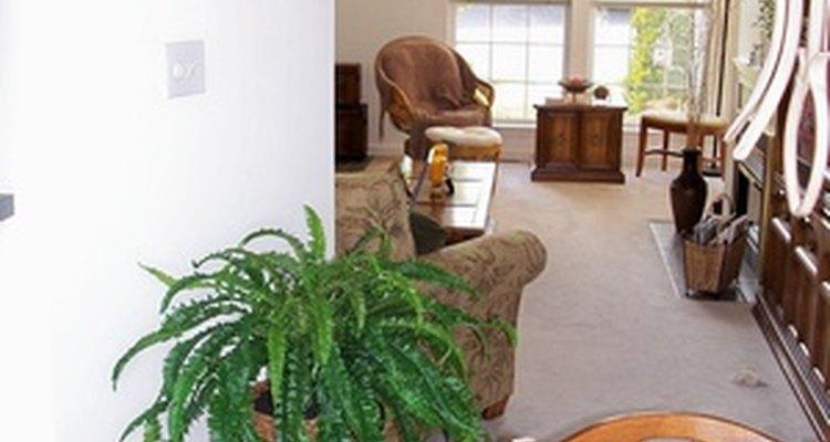 Hacer que tu casa huela bien requiere un poco más que mantenimiento elemental.