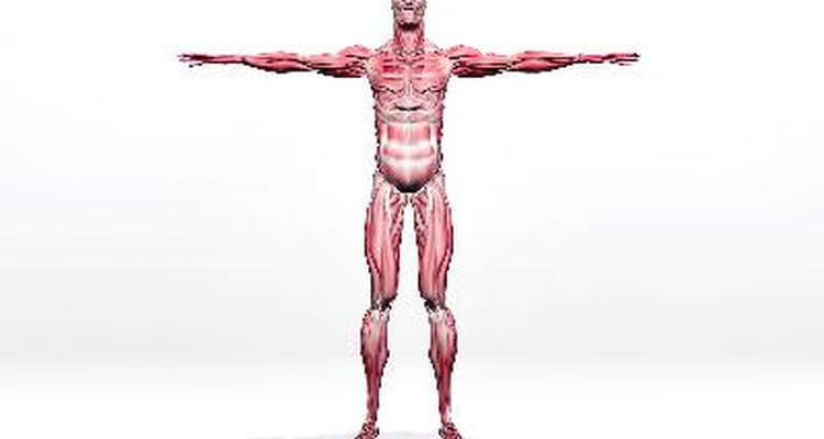 Mesmo músculos com aparência saudável podem estar com lesões presentes em suas fibras